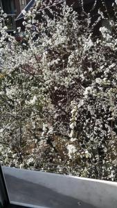 dış ağaç