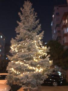 dış ağaç 2